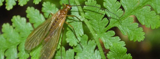 The Insects of Virginia Number 16
