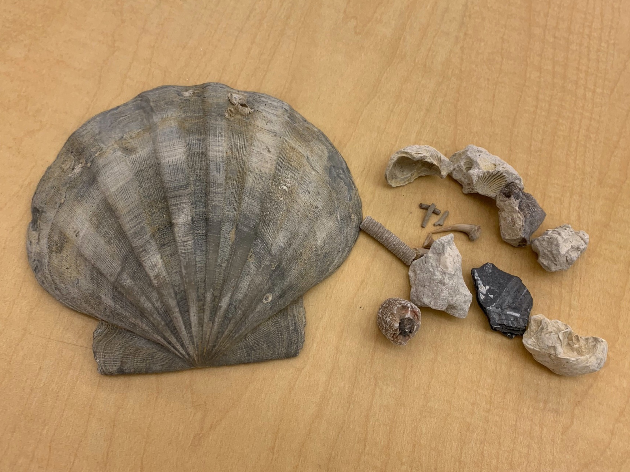 Junior Paleontologist Kit Image
